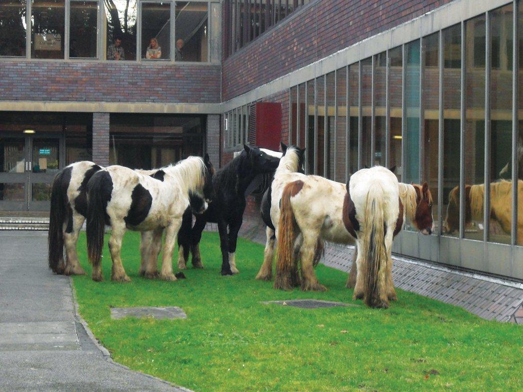 horse abandonment