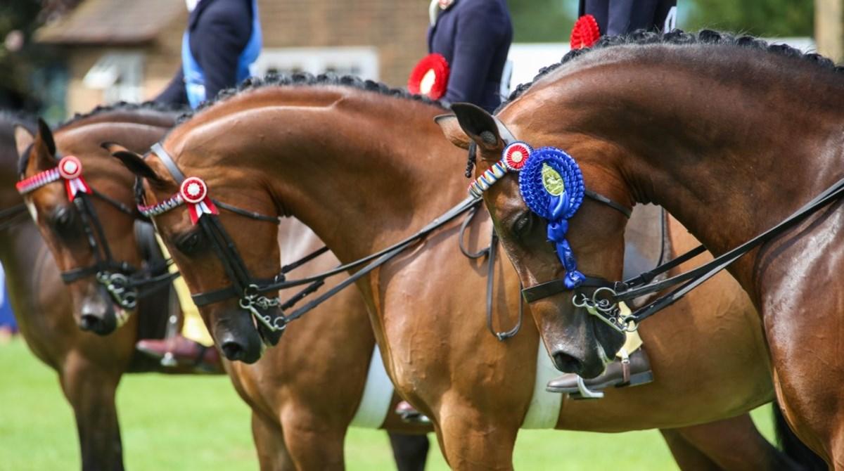 horse show guide